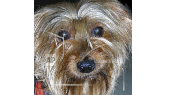 Nutcracker Dog_1542947104208.jpg.jpg