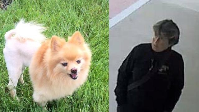 stolen service dog_1541179158008.png_61000584_ver1.0_640_360_1541264392732.jpg_61069022_ver1.0_640_360_1541323927818.jpg.jpg