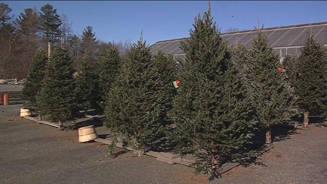 Christmastrees_1544216535695.jpg