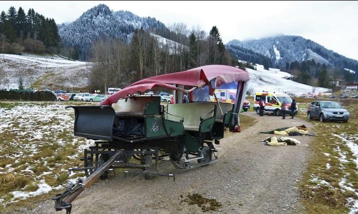 German Horse edit _1545757842072.jpg.jpg