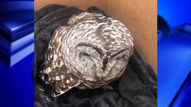 Owl Monson_1549514630803.jpg.jpg