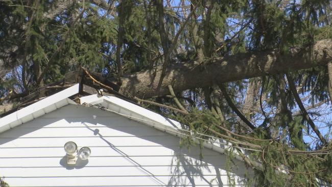 holyoke tree garage_1551218818130.jpg.jpg