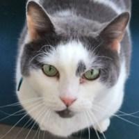 Kitty_1552336286121.JPG