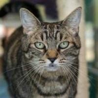 tigress web_1554148424217.jpg.jpg