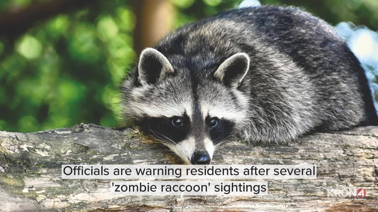 Officials_warn_of__zombie_raccoons__sigh_1_20190516132431-846653543