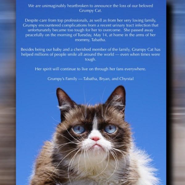 grumpy cat_1558087100293.jpg-873772846.jpg