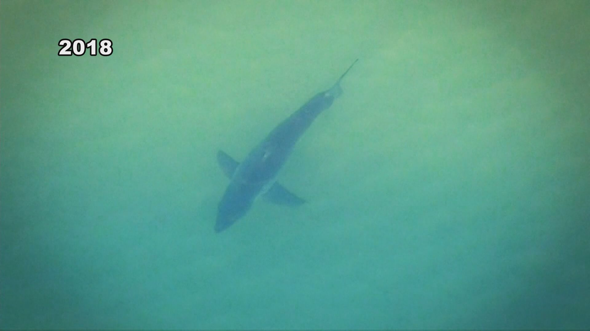 More Great White sharks spotted off of Cape Cod | WWLP on