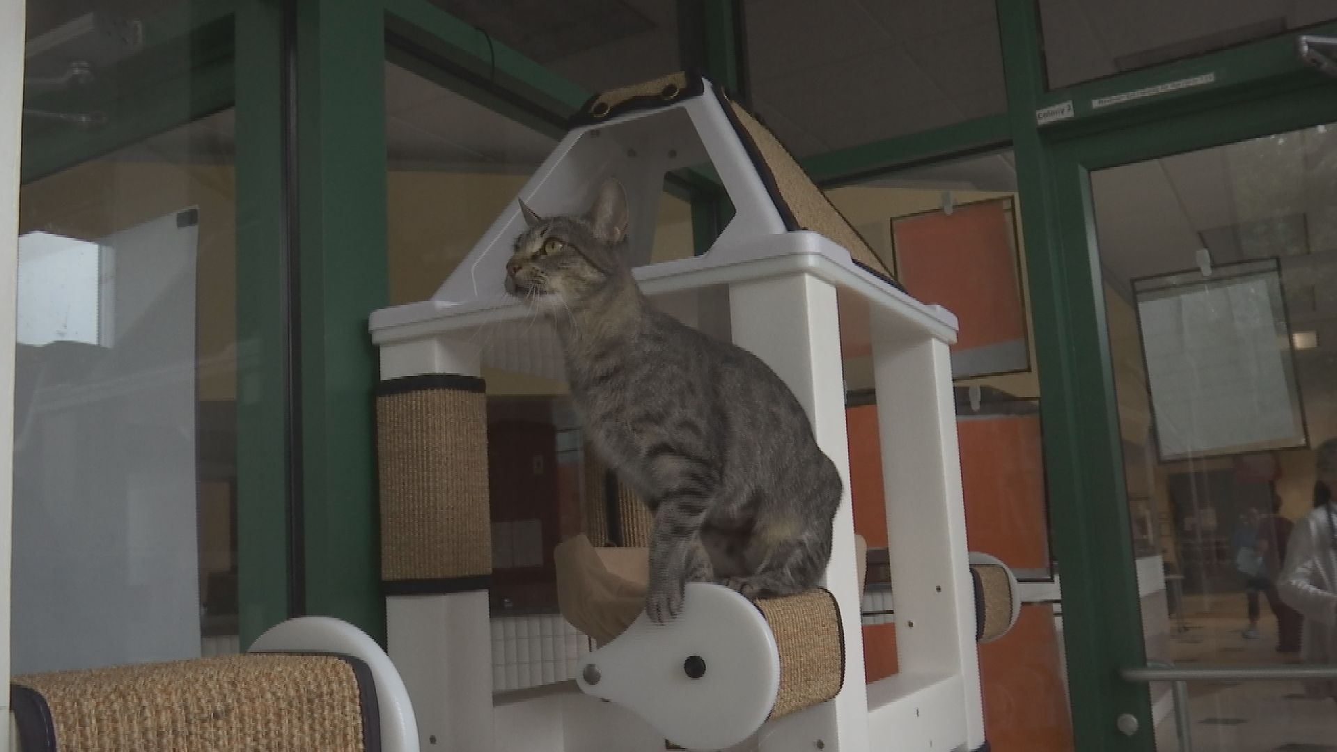 Scratching Posts Added to Humane Society Shelter