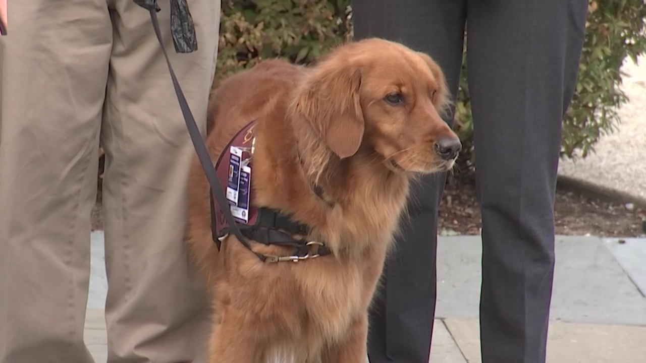 Bill would help provide therapy dogs to vets
