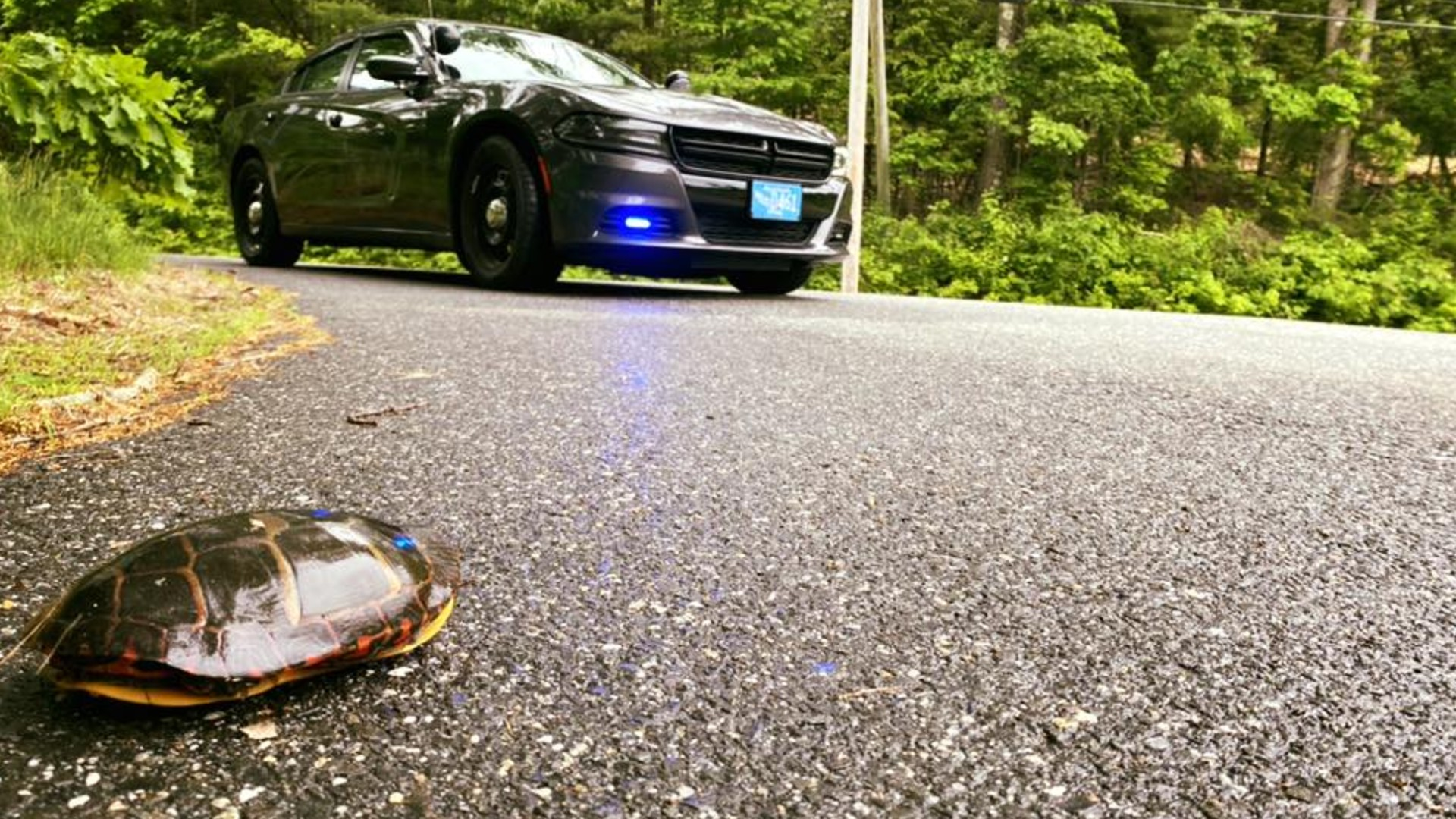 Stop Help The Turtles Cross The Road Safely Wwlp