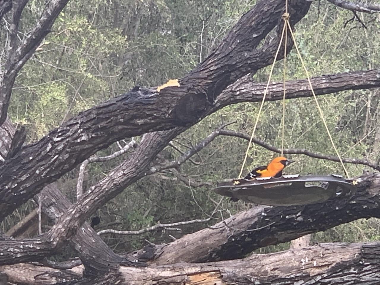Fate of popular South Texas birding spot uncertain as border wall moves closer