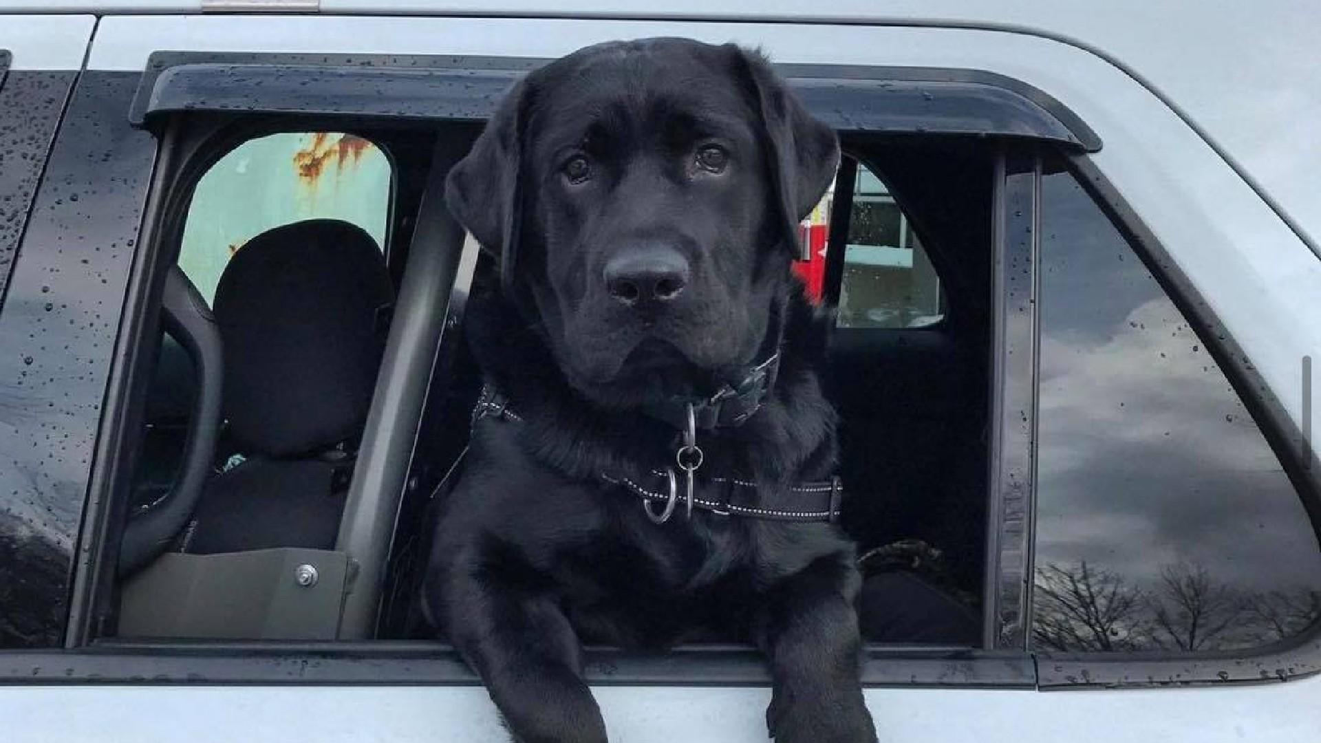 Officer Beko
